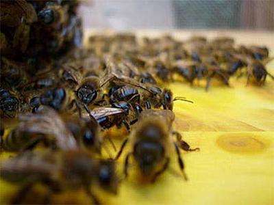 Фото с сайта top-bar-hive.com