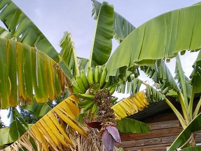 Фрагмент фото пользователя submarginals с сайт flickr.comа