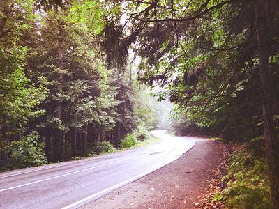 Трасса через лесной массив в Домбае