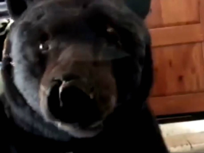 Убирайся отсюда, чертов медведь: хищник вгараже напугал американку